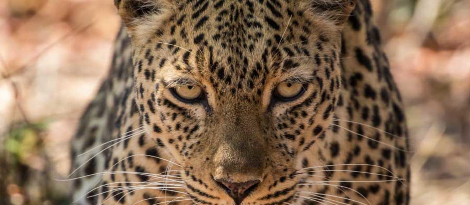 Sambia und Südafrika: Panoramaroute, Safari und Viktoriafälle Urlaub 1