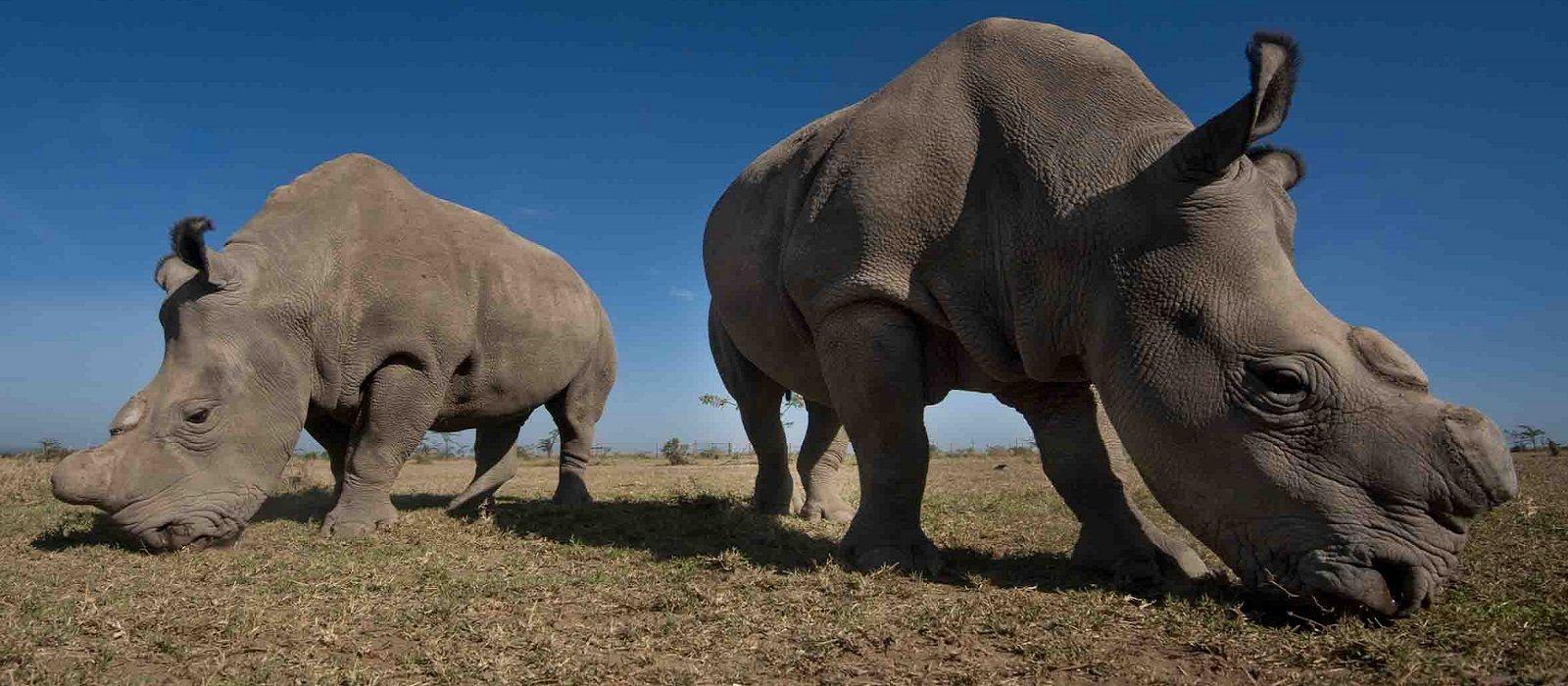 Kenia: Abseits bekannter Wege Urlaub 2
