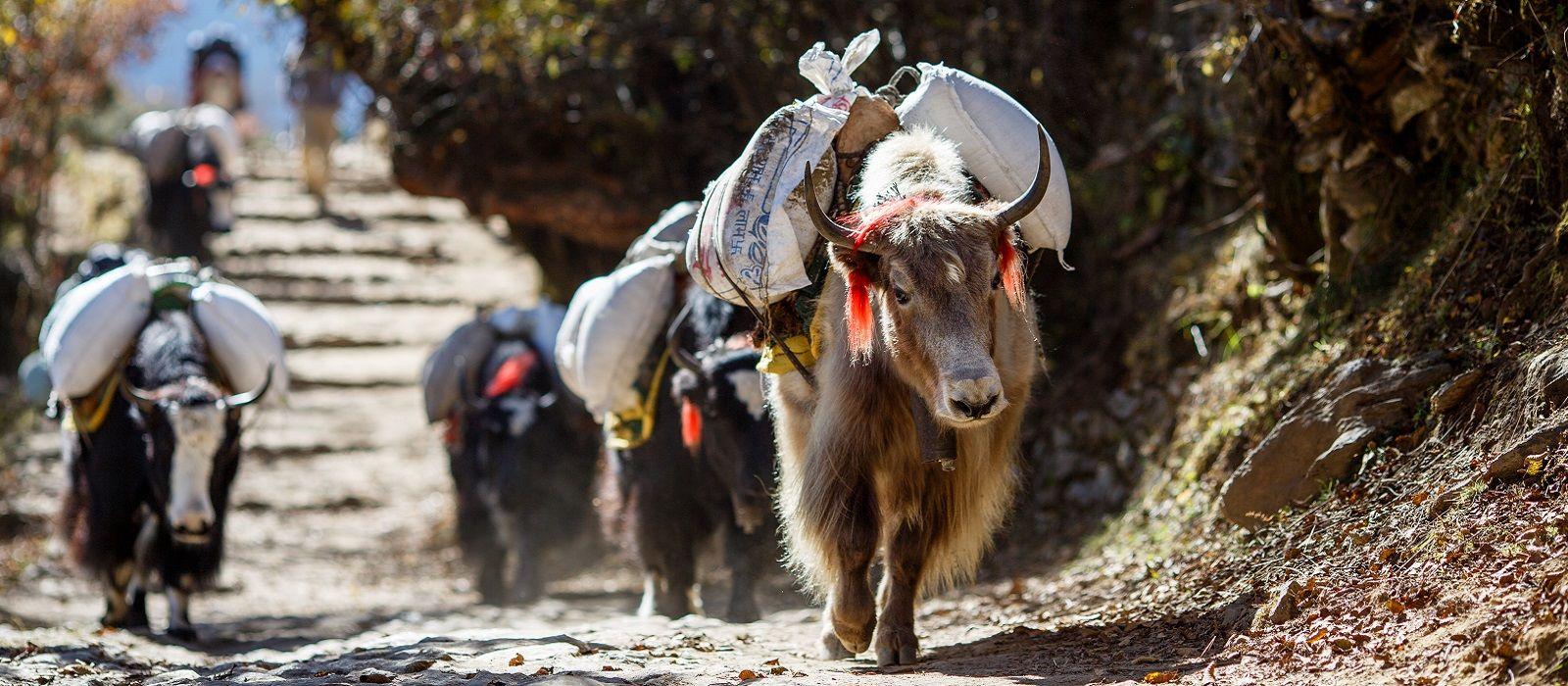Highlights der Himalayas: Nepal, Bhutan und Tibet Urlaub 1