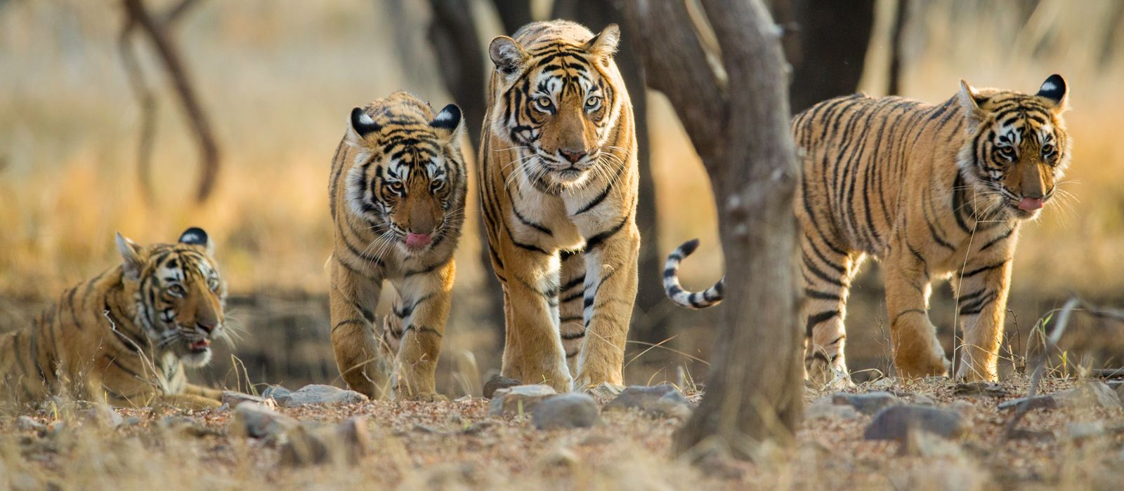 Central & West India Tours & Trips 1
