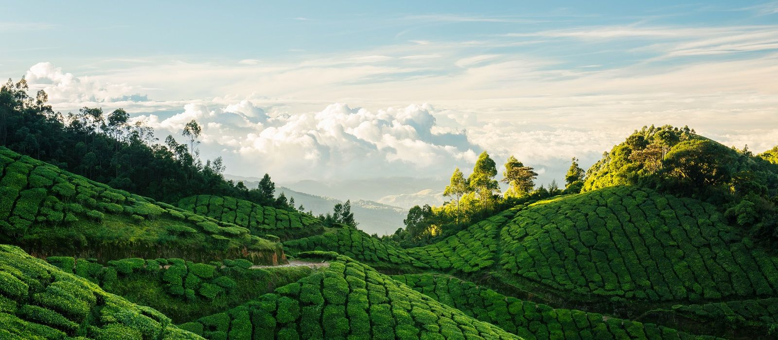 Simply South India: Heritage, Landscapes and Beach Tour Trip 4