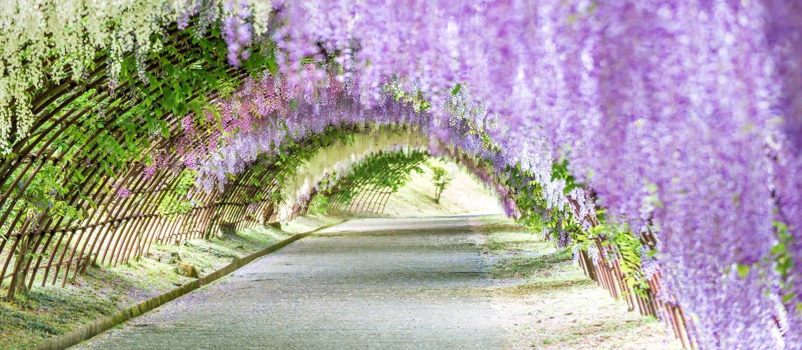 Reiseziel Fukuoka Japan