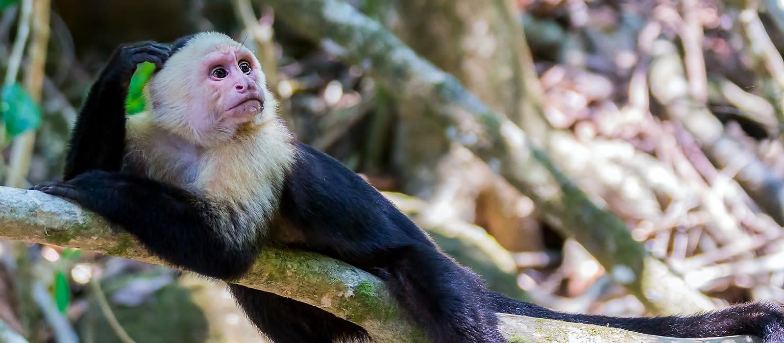 Classic Treasures of Costa Rica Tour Trip 3