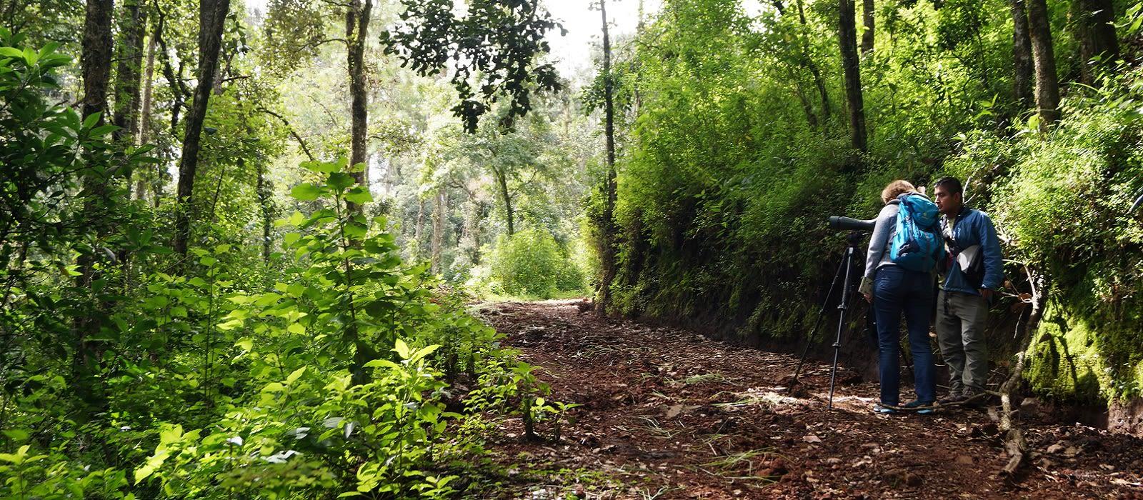 Birdwatcher's Bliss, Guatemala Tour Trip 2