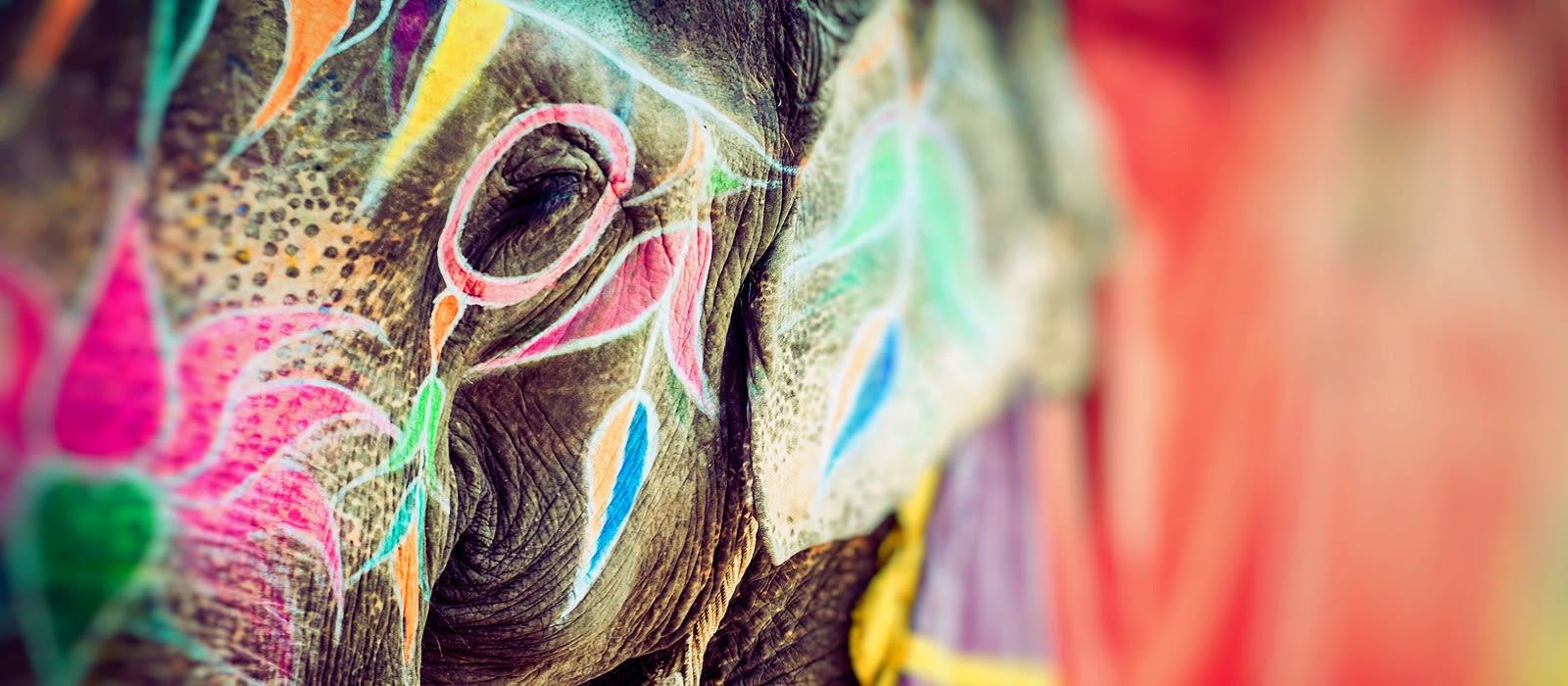 Regal North India: Holi Special Tour Trip 1