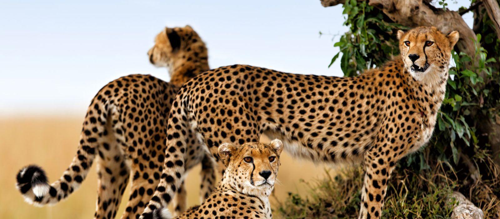 Kenia: Wandersafari & Strand Urlaub 1
