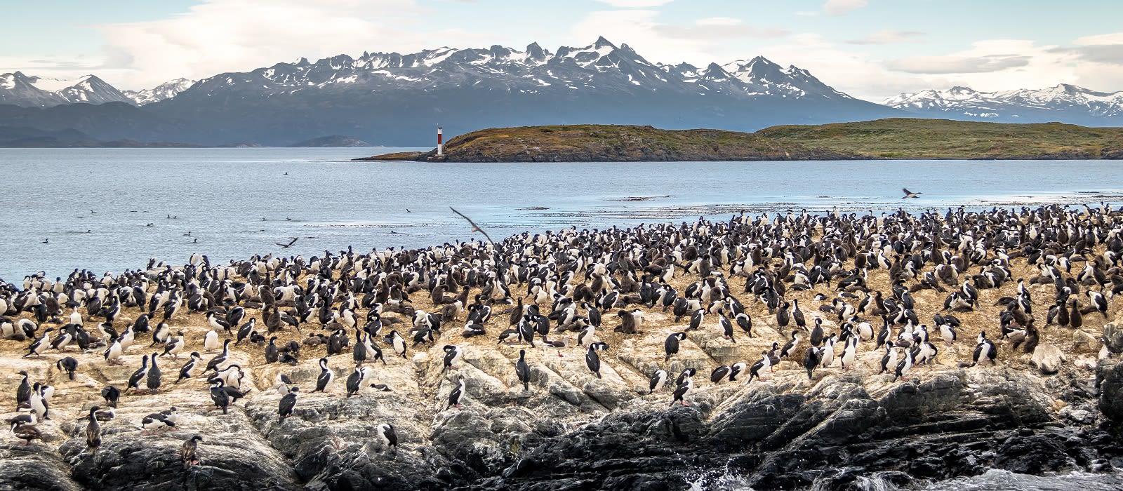 Falls, Falklands and Antarctic Adventures Tour Trip 1