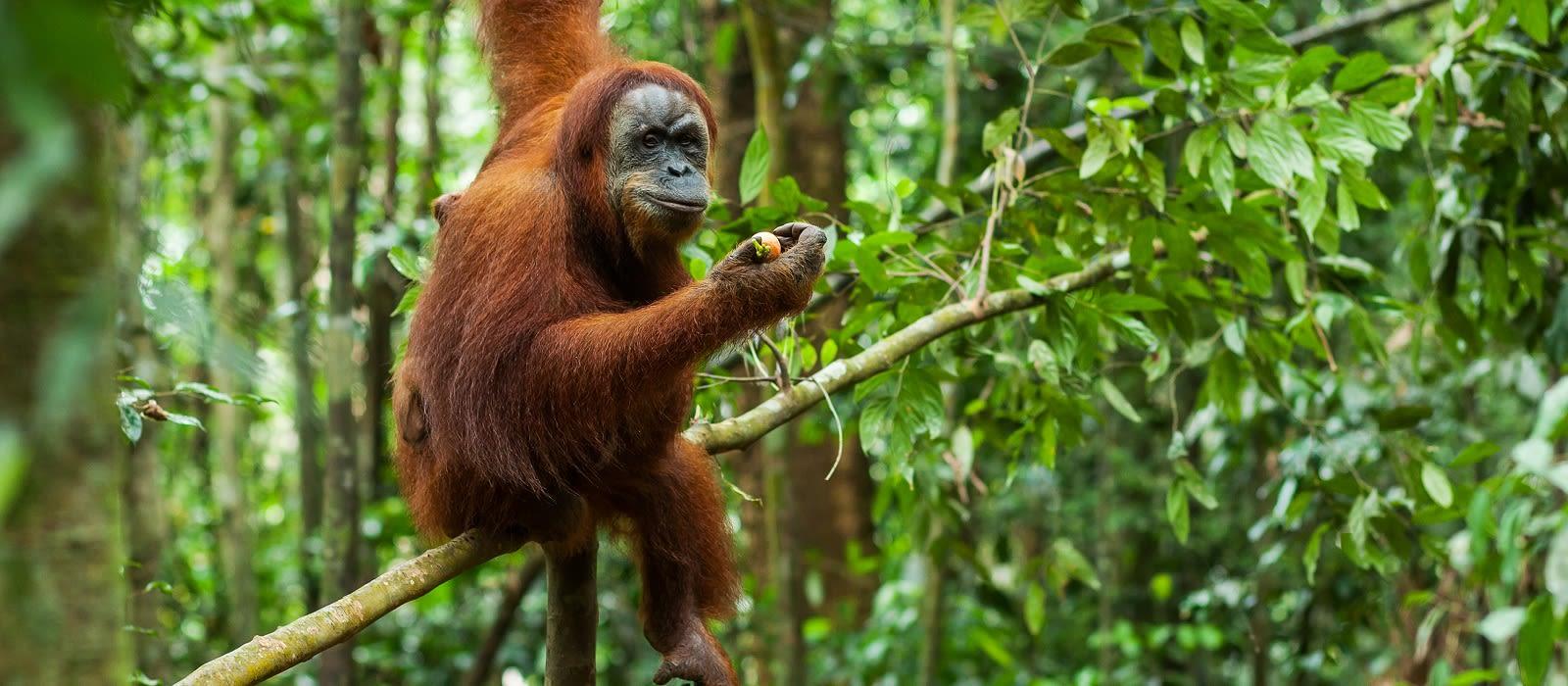 Die Klassiker auf Sumatra und Java Urlaub 1