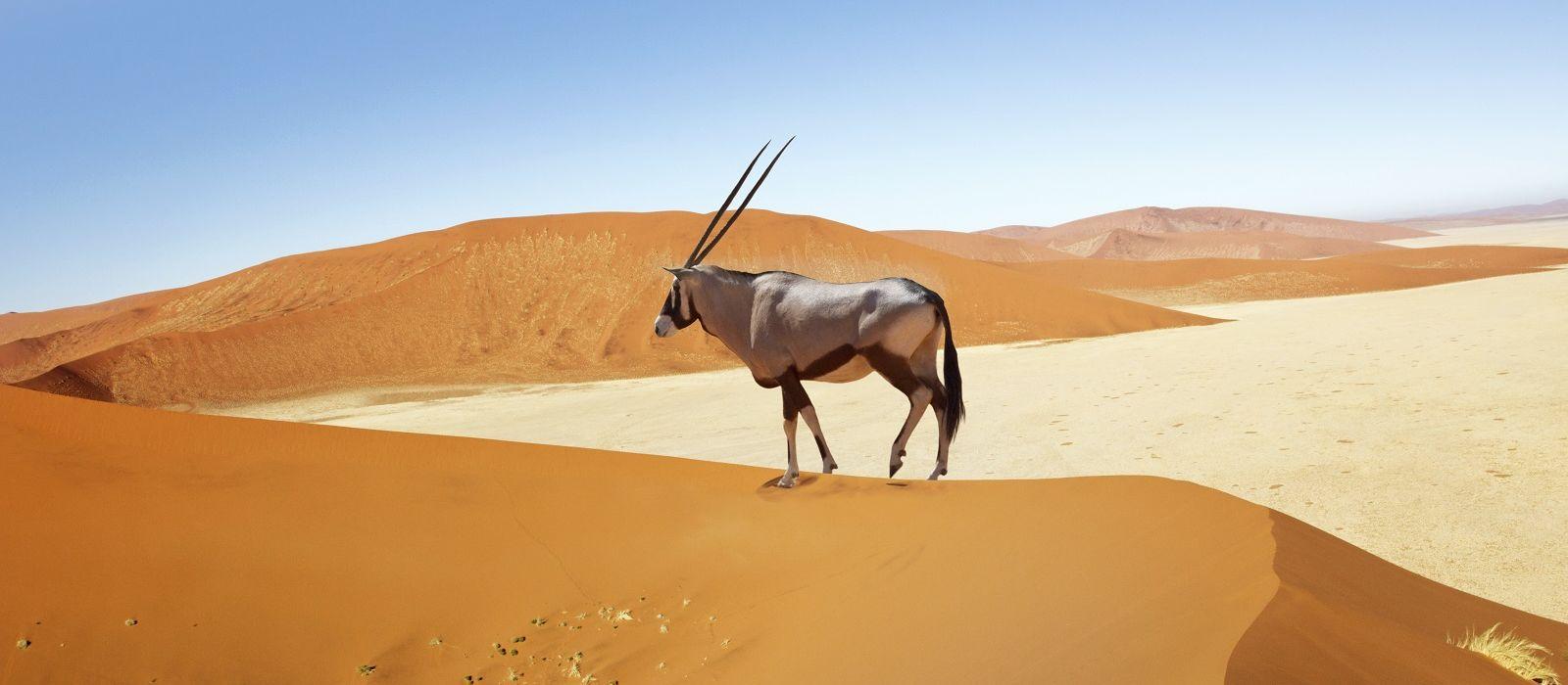 Namibia Flugreise: Die Klassiker Urlaub 3