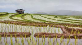 Reiseziel Muang La Laos