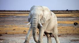 Reiseziel Kaokoland Namibia