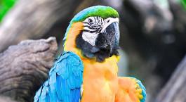 Destination Amazonas Brazil