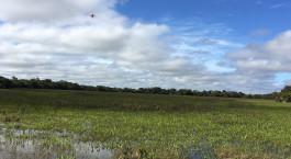 Reiseziel Südliches Pantanal Brasilien