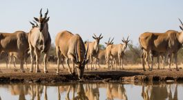 Destination Tuli Game Reserve Botswana
