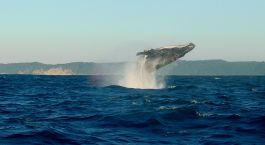 Destination Richards Bay South Africa