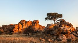Destination Tuli Block Botswana