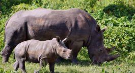 Reiseziel Ziwa Rhino Sanctuary Uganda