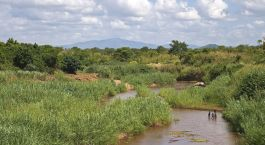 Destination Liwonde National Park Malawi