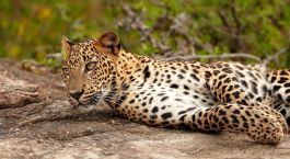 Destination Wilpattu National Park Sri Lanka