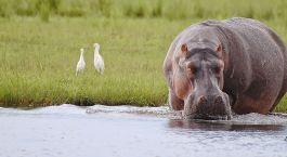 Reiseziel Chobe National Park Botswana