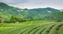 Destination Darjeeling East India