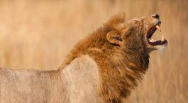 Reiseziel Grumeti Wildschutzgebiet Tansania