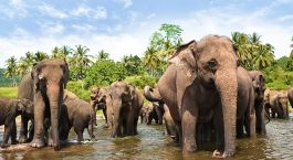 Yala Sri Lanka