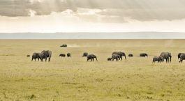 Destination Saiwa Swamp Kenya