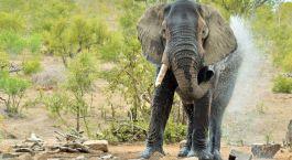 Reiseziel Zentraler Krüger Südafrika