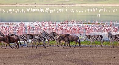 Empfohlene Individualreise, Rundreise: Tansania: Safari & Romantisches Sansibar
