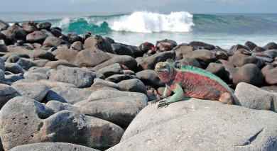 Example private tour: Galapagos: Nature's Secrets Revealed
