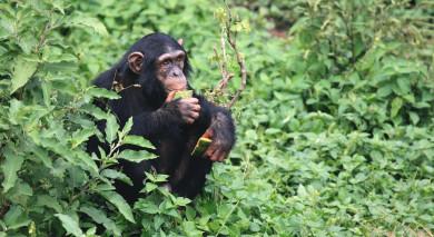 Empfohlene Individualreise, Rundreise: Uganda Safarireise – Primaten und wilde Landschaften