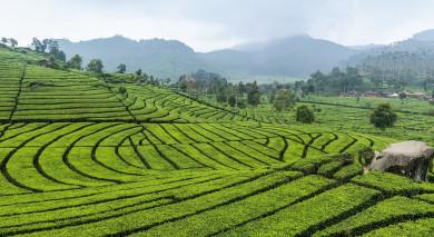 Empfohlene Individualreise, Rundreise: Tempel und Tee – Sri Lankas schönste Seiten