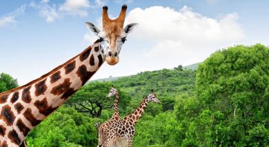 Empfohlene Individualreise, Rundreise: Südafrikas Wildnis entdecken – West Kap und Krüger Nationalpark
