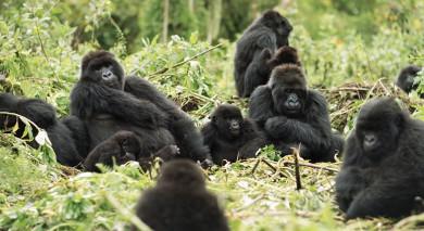 Empfohlene Individualreise, Rundreise: Tansania und Ruanda: Gorilla Trekking und Safari Abenteuer