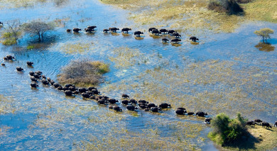 Example private tour: Botswana Safari: Your Wildest Dreams