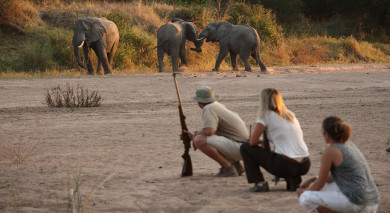 Example private tour: Tanzania: Southern Wilderness and Beach
