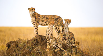 Example private tour: Maasai Magic, Safari and Zanzibar
