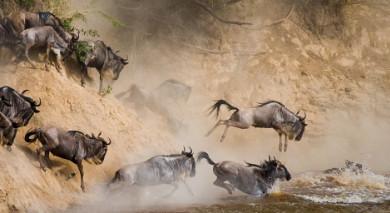 Empfohlene Individualreise, Rundreise: Tansania – Luxus am See und wilde Tiere
