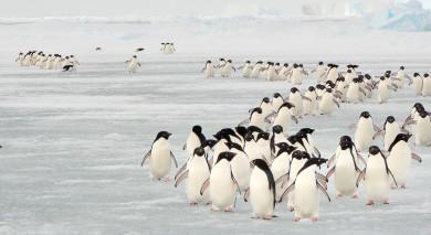 Empfohlene Individualreise, Rundreise: Chile und Antarktis – sagenhafte Schneelandschaften