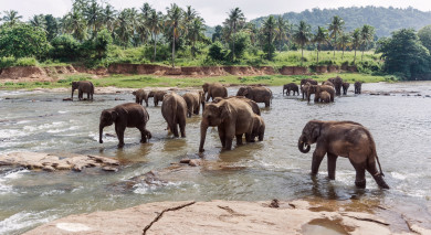 Empfohlene Individualreise, Rundreise: Sri Lanka – Kultur, Safaris und Strand