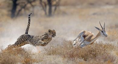 Empfohlene Individualreise, Rundreise: Namibia einmal anders: Flugreise jenseits gewohnter Pfade