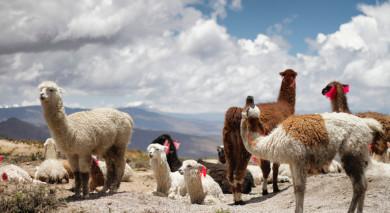 Empfohlene Individualreise, Rundreise: Peru – geheimnisvoller Norden
