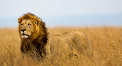 Example private tour: Highlights of Southern Africa