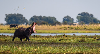 Empfohlene Individualreise, Rundreise: Highlights des südlichen Afrika – vom Okavango Delta bis zu den Viktoriafällen