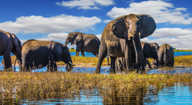 Example private tour: Botswana: Wildlife and Waterfalls