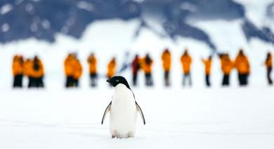 Empfohlene Individualreise, Rundreise: Antarktis Express – Höhepunkte der Antarktischen Halbinsel und Flug über die Drakestraße