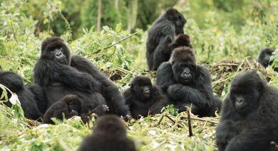 Example private tour: Gorilla Trekking in Rwanda