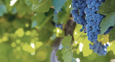 Example private tour: Argentina & Chile: Food and Wine Experience