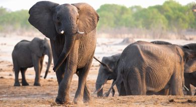 Example private tour: Classic Kenya – Samburu, Masai Mara and Beach Break